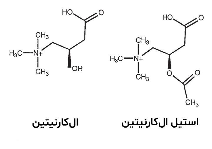 ال کارنیتین - انواع مختلف کارنیتین