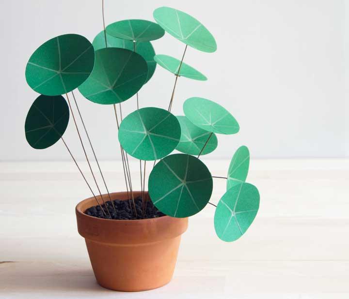 گیاهان آپارتمانی - پول چینی