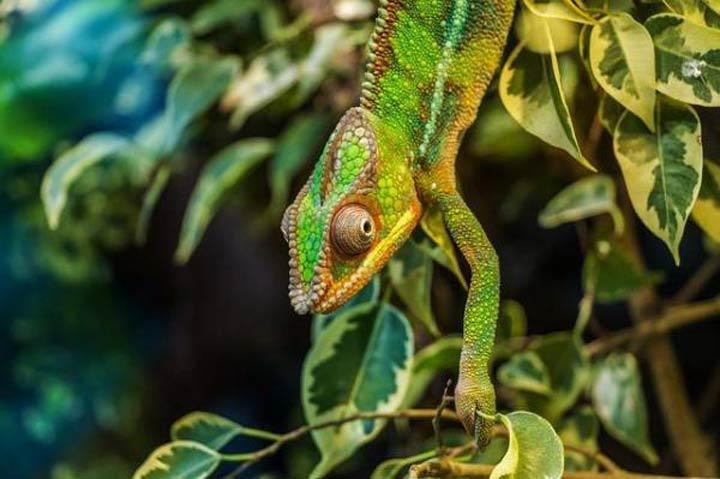 آفتاب پرست-زیباترین حیوانات