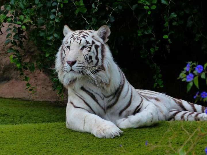 بنگال-زیباترین حیوانات