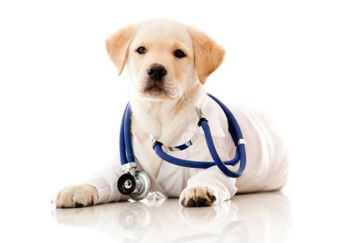 نگهداری سگ - مراقبت از سلامت سگ