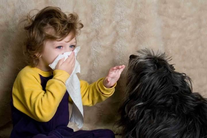 آلرژی به سگ - علائم