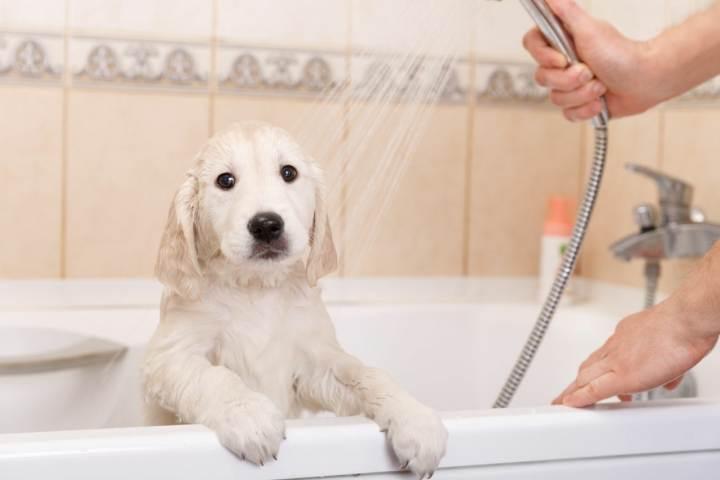 آلرژی به سگ - تغییر سبک زندگی