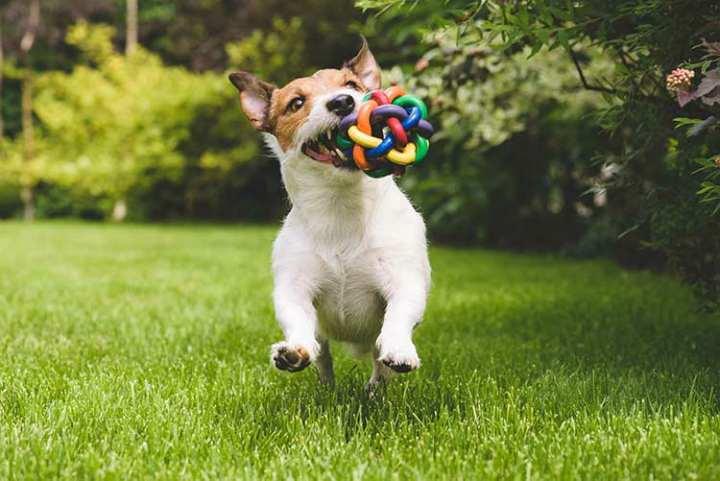 نگهداری سگ - جایزه دادن به سگ
