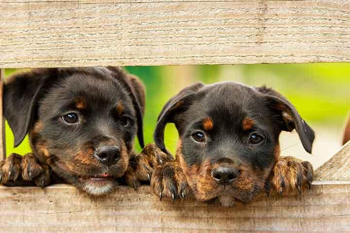 بیماری های سگ و نشانههای آن