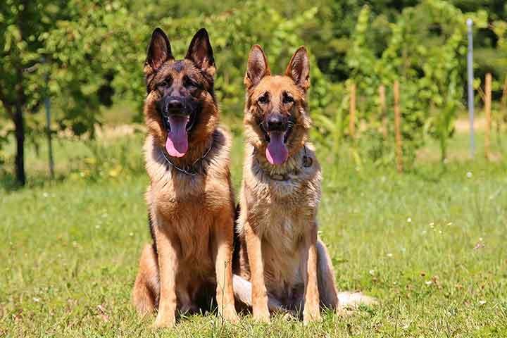 بیماری های سگ و درمان آن