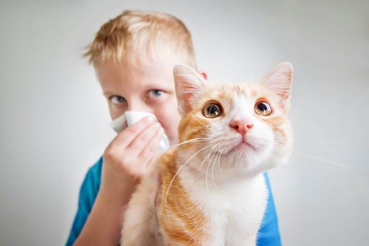 "Image result for حساسیت به موی گربه"""