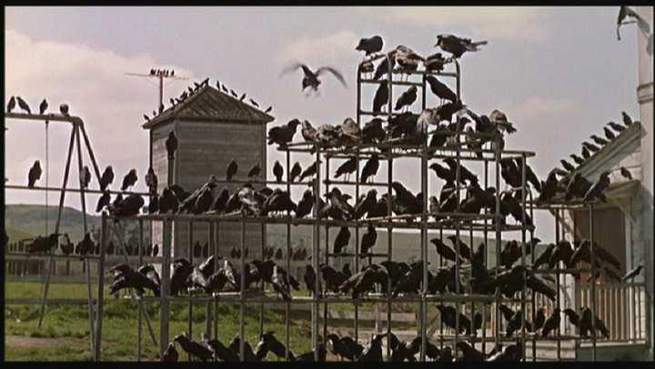 بهترین کتابهایی که تبدیل به فیلم شدند - پرندگان