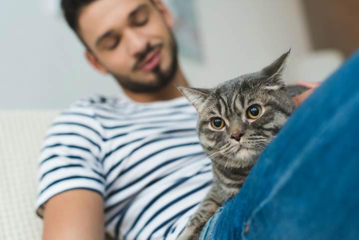 آلرژی به گربه - نگهداری گربه با وجود آلرژی