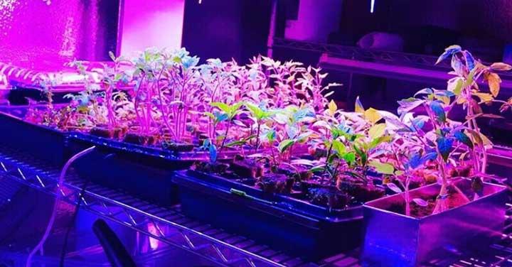 لامپ رشد گیاه - نورپردازی