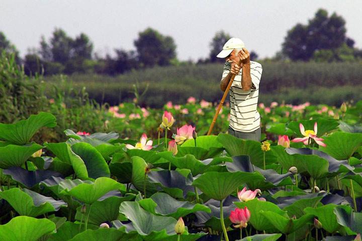 Anzali Wetland - Photo by Milad Monsef