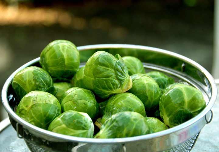 کلم بروکسل شکلی از کلم ها با نام علمی Brassica oleracea است.