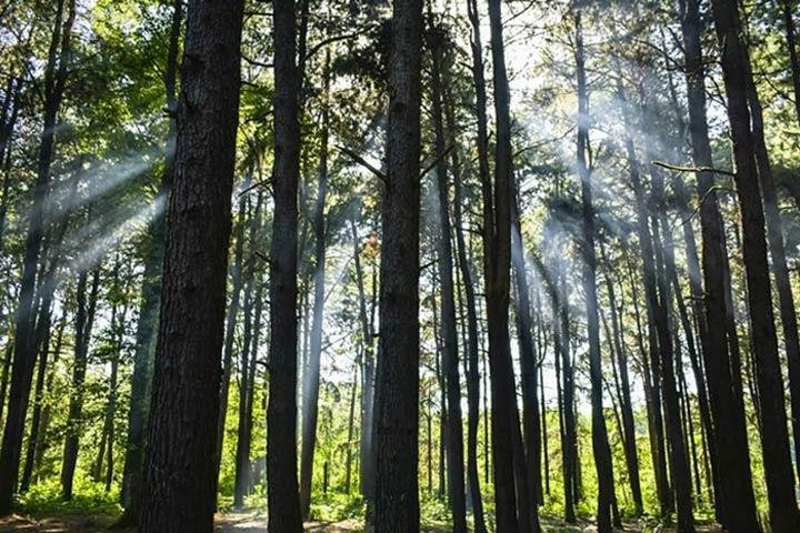جنگل نزدیک ساحل گیسوم - عکس از رضا عربی