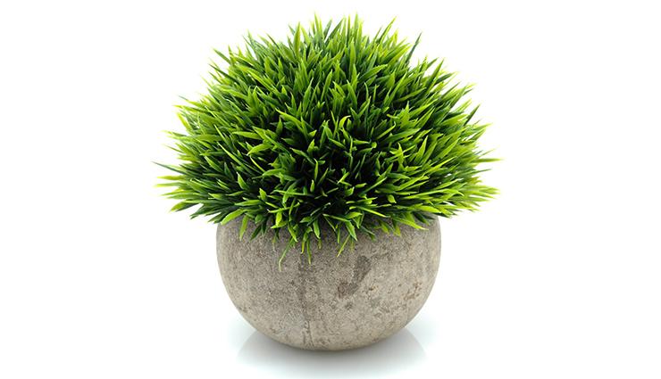 طرز تهیه سبزه عید؛ ایدههای خلاقانه برای درست کردن سبزه هفت سین