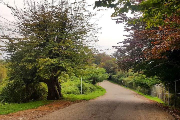 جاهای دیدنی تالش - پارک جنگلی سیاه داران