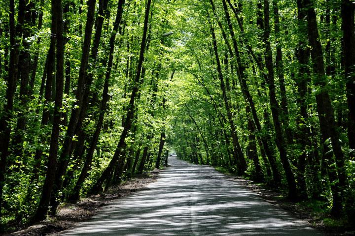 جاهای دیدنی تالش - جنگل گیسوم