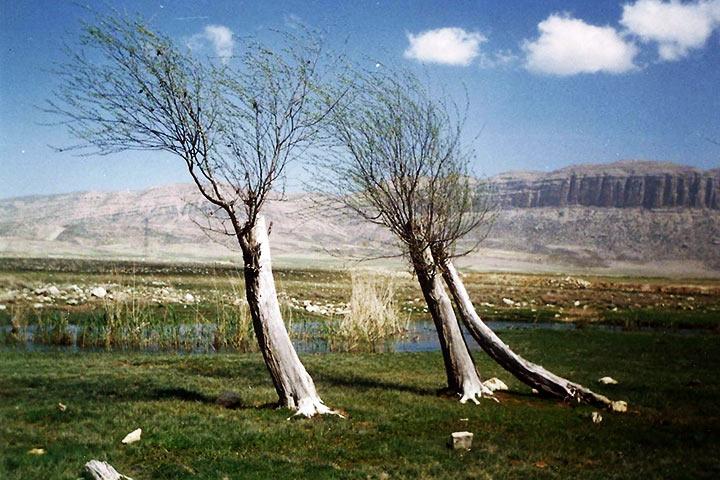 عکس از وحید بهادری