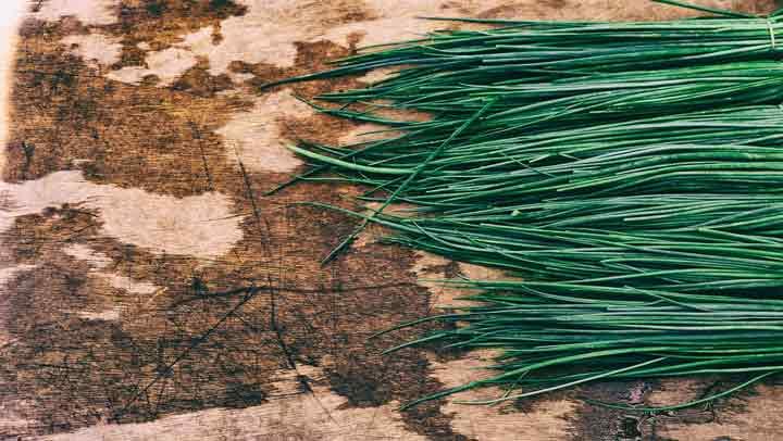 تره برای کاشت سبزی در گلدان
