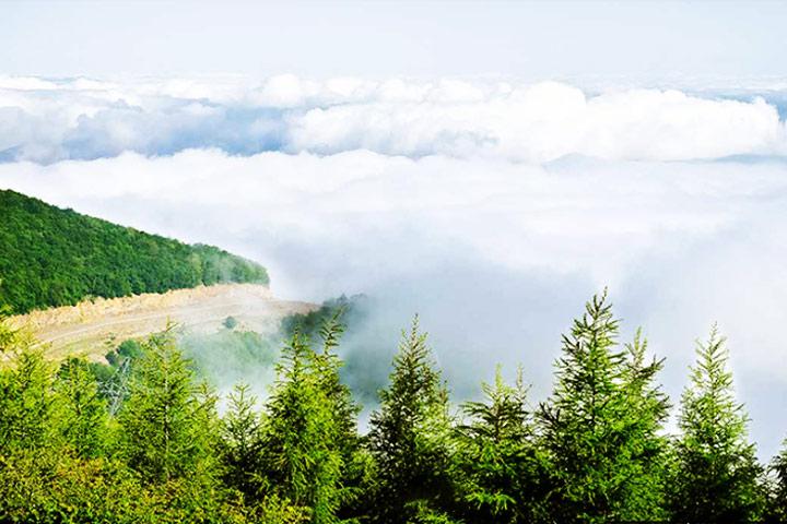 جنگل ابر شاهرود - عکس از احسان احمدی