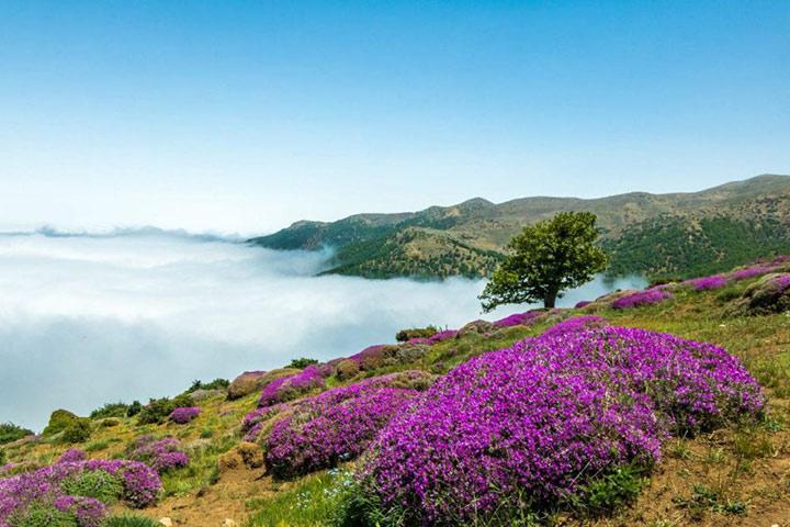 پوشش گیاهی و گل های جنگل ابر شاهرود