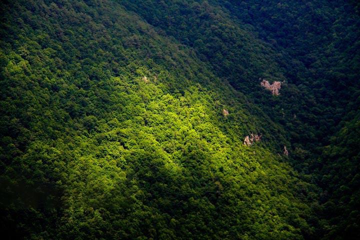 عکس از مسعود محقق - ایسنا - ارتفاعات جنگل ابر شاهرود