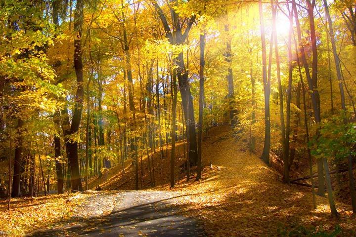 جنگل ابر شاهرود در پاییز