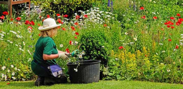 کنترل عصبانیت، باغبانی