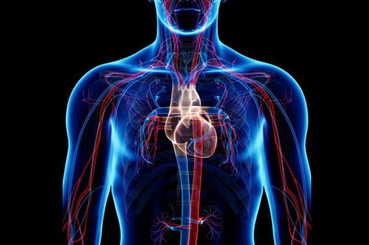 سلامت دستگاه قلبی عروقی - آمادگی جسمانی