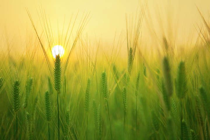 تابش بیشتر آفتاب- بارداری در تابستان