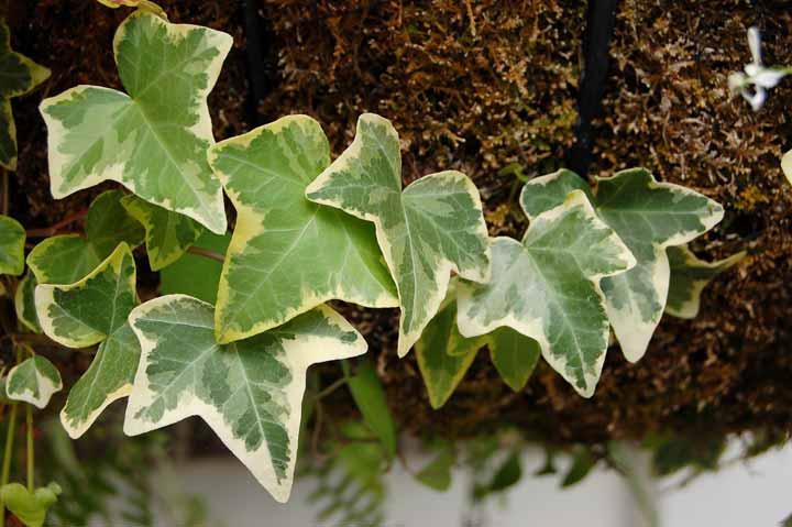 پاپیتال یکی از بهترین گیاهان برای محل کار