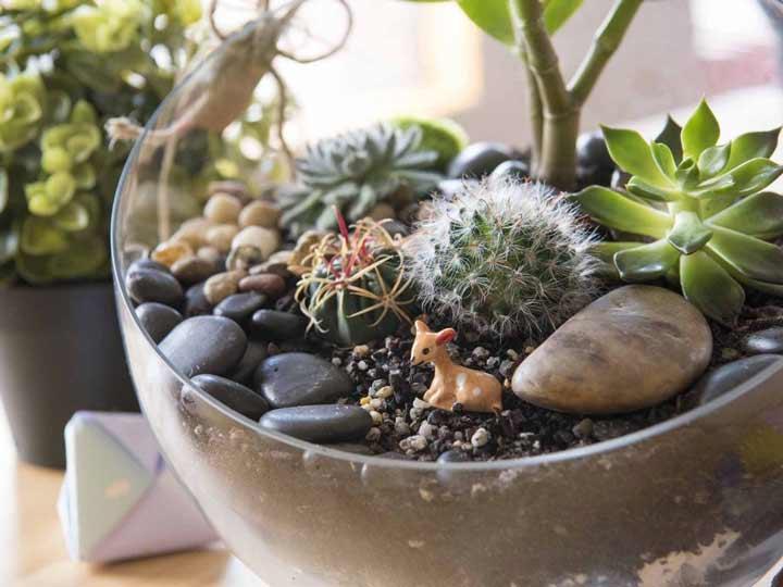 کاکتوس یکی از بهترین گیاهان برای محل کار