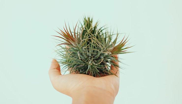 انواع گیاهان هوازی یا تیلاندسیا و روش صحیح نگهداری از آنها