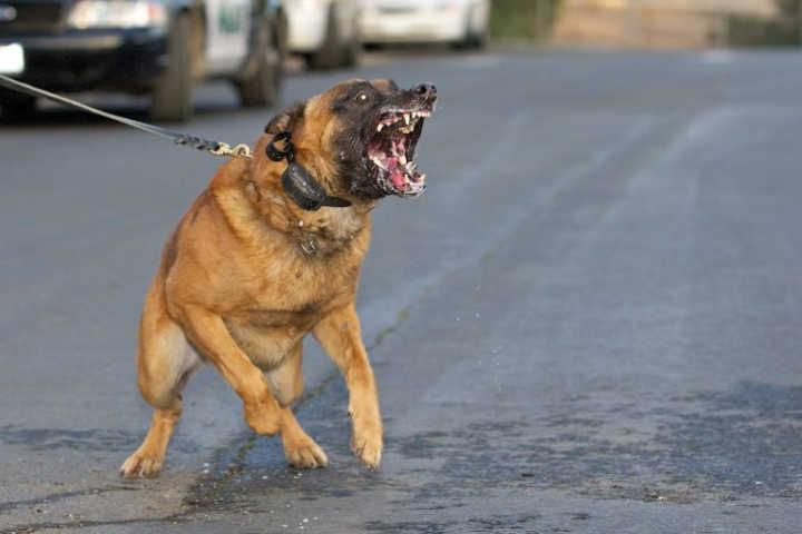 سگ-خطرناک ترین حیوانات دنیا