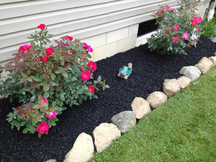 کوددهی-مراقبت از گل رز در باغچه