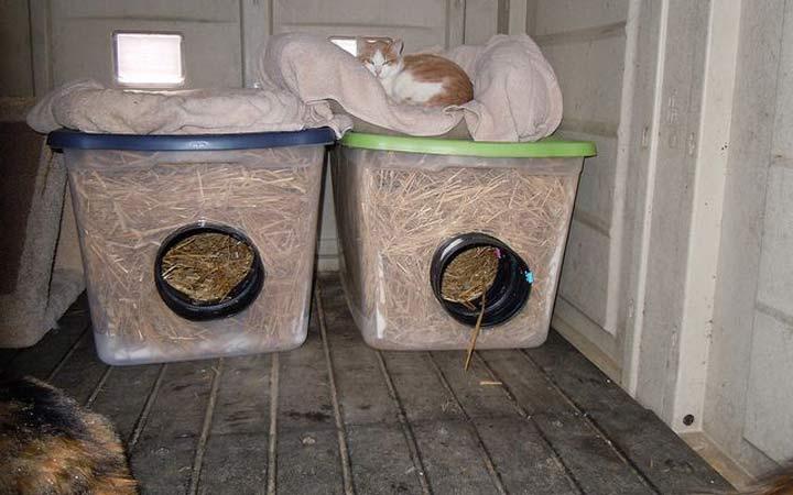درست کردن سرپناه برای گربه