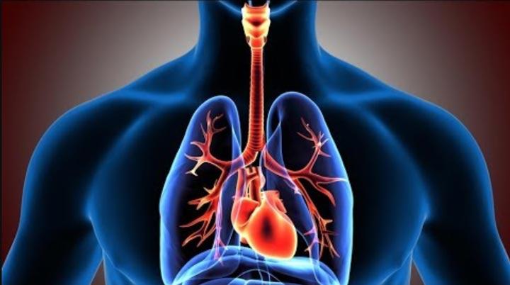 خواص مویز، سیستم تنفسی