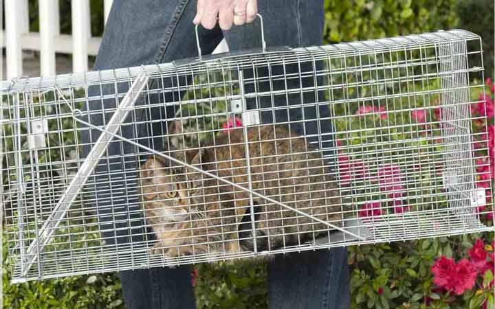 همکاری با مؤسسات حمایت از حیوانات برای به دام انداختن گربهها