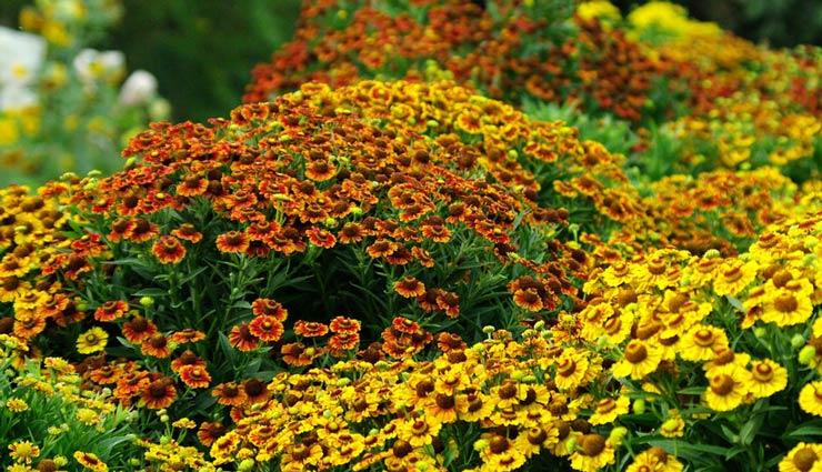 زیباترین گل های پاییزی که میتوانید در گلدان یا حیاط خانهتان بکارید