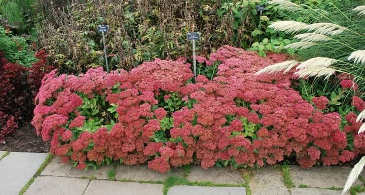 سدوم آتم جوی از گیاهان پاییزی