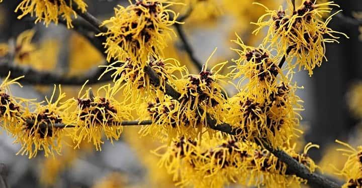 فندق افسونگر از گیاهان پاییزی - زیباترین گل های پاییزی