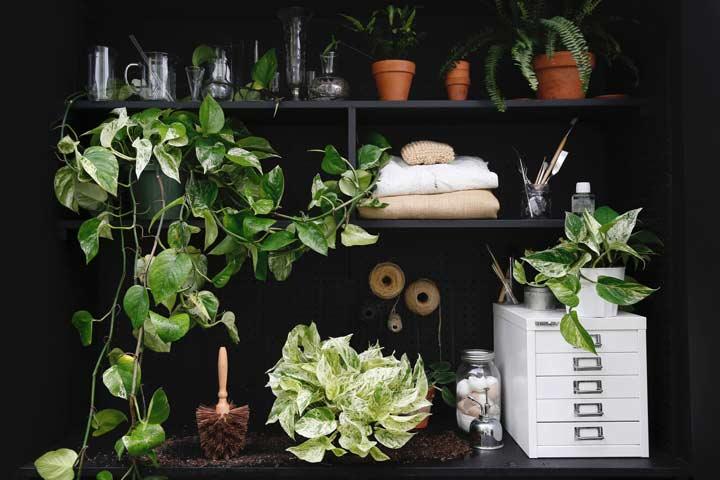 تعداد گیاهان و اثر آن در تصفیه هوا