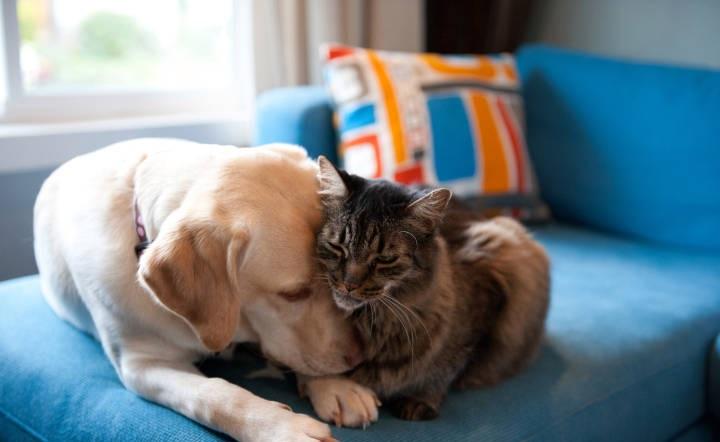 بررسیها و مطالعات گذشته بر روی سگها و حیوانات خانگی