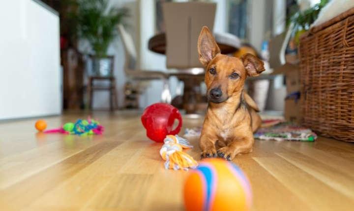 سرگرم نگهداشتن سگها در خانه بههنگام قرنطینه کرونا