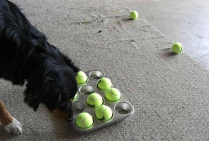 پازل کیک فنجانی برای سرگرم نگهداشتن سگها