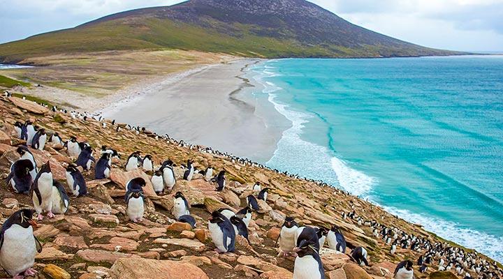 جزیره فالکلند - زیباترین جزیره های دنیا
