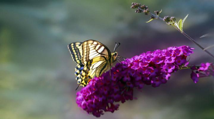 دمموشی از انواع گلهای خانگی مقاوم است
