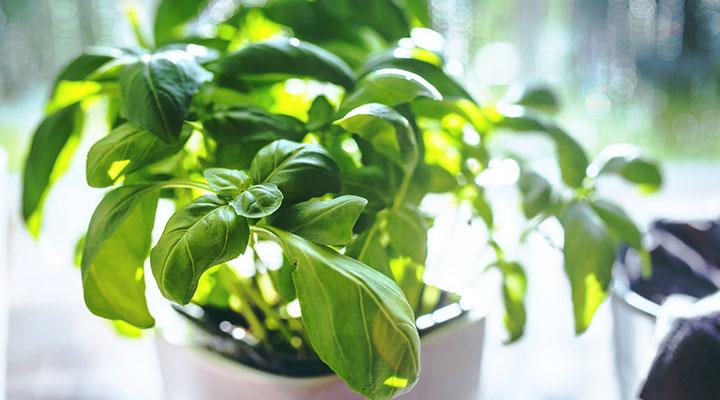 کاشت گیاه - تفریح در خانه در روزگار کرونایی