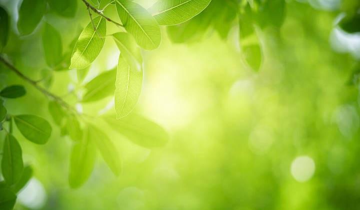 استفاده از رنگ سبز در دکوراسیون خانه و بررسی تأثیر روانشناختی رنگ سبز بر روحیات انسان