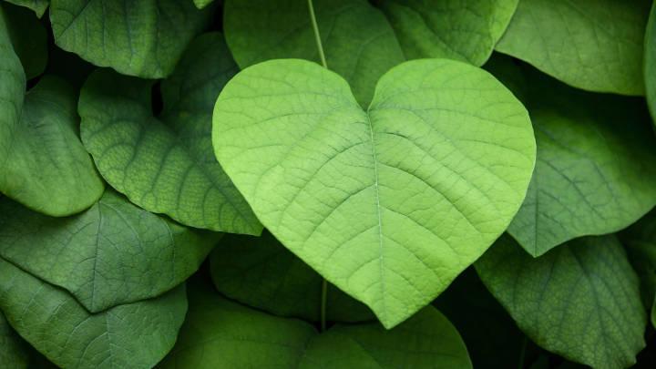 برانگیختن احساس همدردی از اثرات روانشناختی رنگ سبز