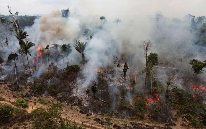 جهان در سال ۲۰۵۰ - نابودی جنگلها